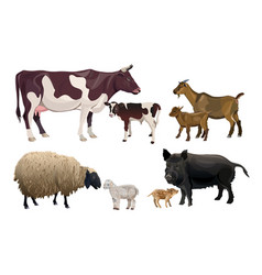 farm animals and their kids vector image