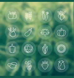 Harvest vegetables farming line icons set vector