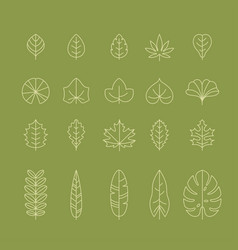 Leaf outline icon vector