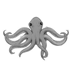 octopus gray hand drawn sketch vector image
