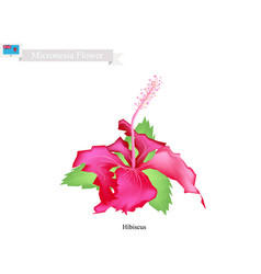 Popular flower federated states micronesia vector