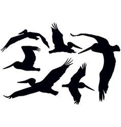 Flying Pelicans vector image