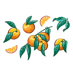 collection orange branches on a white vector image