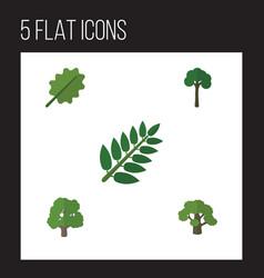 Flat icon bio set evergreen decoration tree vector