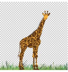 giraffe head animal for t-shirt vector image