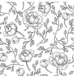 Peony flower seamless pattern drawing hand vector