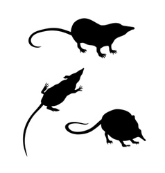 Silhouettes of a shrew vector