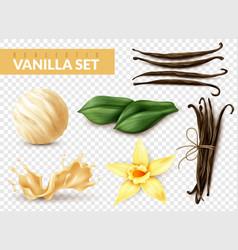 vanilla set realistic transparent vector image