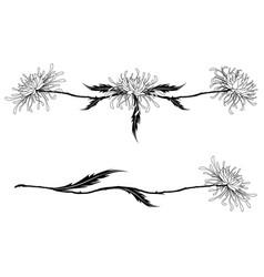 flowers of chrysanthemum vector image vector image