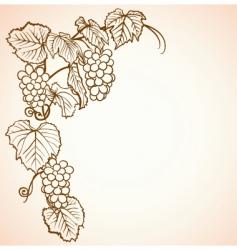 vintage grape background vector image vector image