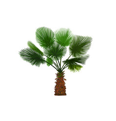 Color fun palm tropical palm tree vector