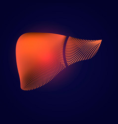 Liver with a point of pain stylized transition vector