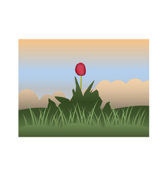 Red tulip against the sky and grass vector