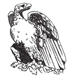 Roman eagle is shown on a pedestal of trajans vector