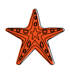 Starfish or sea star icon image vector