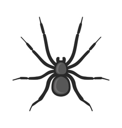 Black Spider Icon on White Background vector