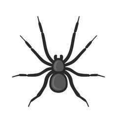 Black Spider Icon on White Background vector