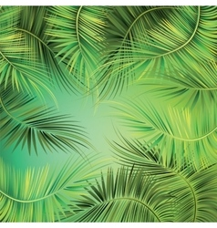 Palm tree branches on green background vector image
