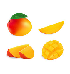 realistic mango set vector image