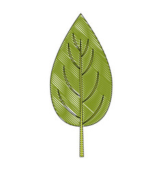 Spinach leaf icon vector