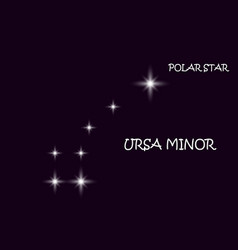 the great bear with lines constellation star vector image