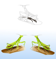 praying mantises vector image