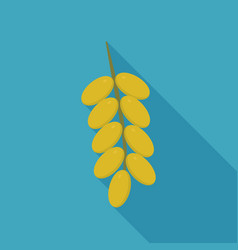 Branch of date palm fruit icon in flat long vector