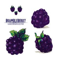 digital detailed brambleberry vector image