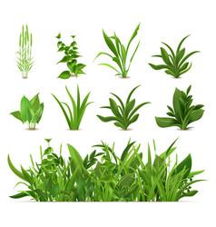 green realistic spring grass fresh plants garden vector image
