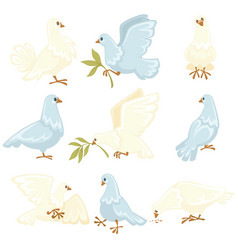 Peace symbol white dove or pigeon isolated animal vector