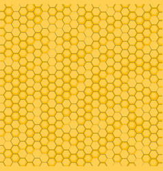 bee honeycomb vector image