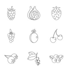 berries icon set outline style vector image