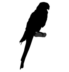 black silhouette of parrot vector image