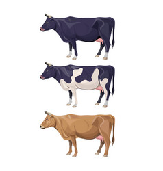 Different cows colors set vector