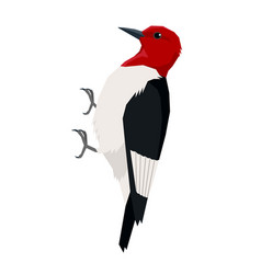 Red headed woodpecker birds isolated object vector