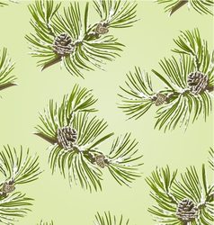 Seamless texture branch Pine tree with pine cones vector