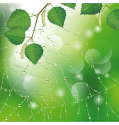 Spider web with leaves vector image