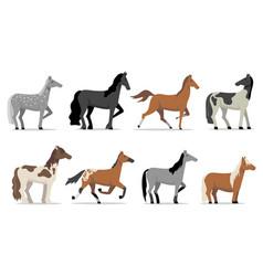 Stud horses set vector