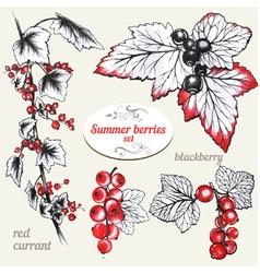 Summer berries vector image