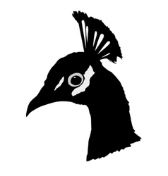 black silhouette of peacock vector image