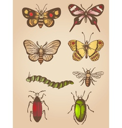 set of hand drawn vintage butterfly and insects vector image vector image