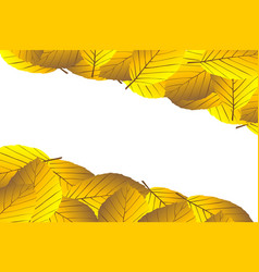 autumnal leaf of beech vector image