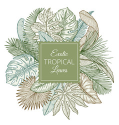 background with different exotic tropical leaves vector image vector image