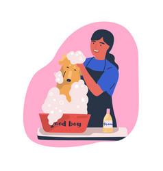 dog washing service flat vector image