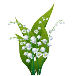 Lily valley vector