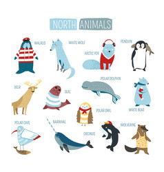North or south polar animals cartoon design vector