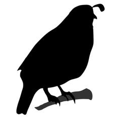 black silhouette of quail vector image