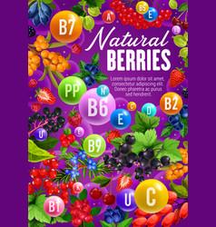 Berry fruits organic vitamins in natural food vector