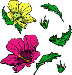Blooming pink and yellow mallow green leaves vector