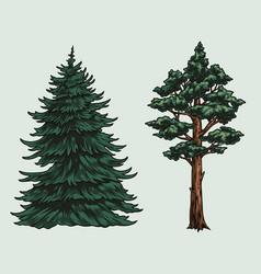 Conifer trees colorful vintage concept vector